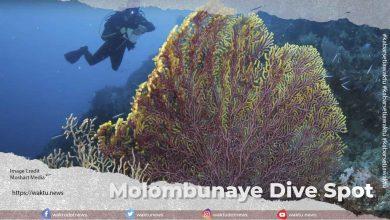 Molombunaye Dive Spot